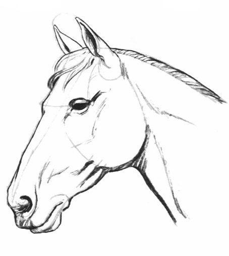 Comment faire un cheval - Comment dessiner un cheval au galop ...